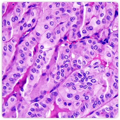 research-histology-core.jpg